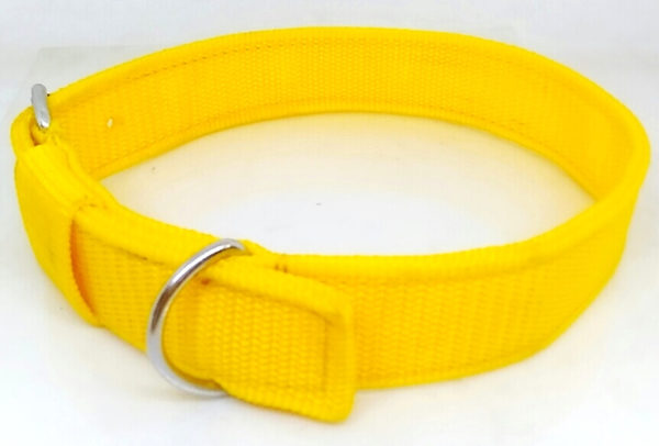 dog-collar-nylon